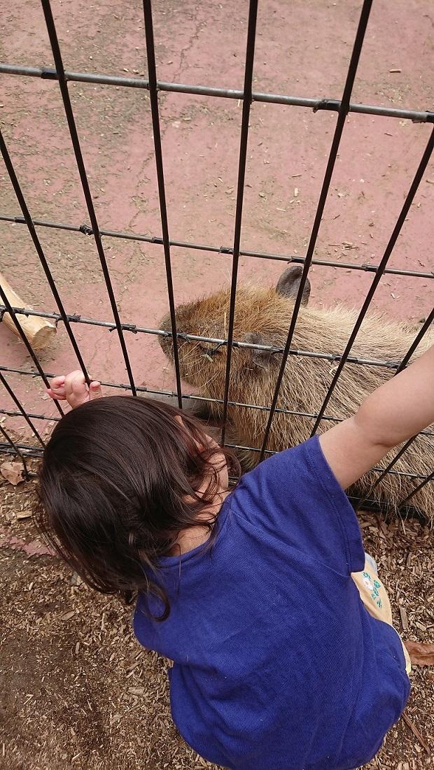2018-2こども自然動物公園21(20180617)