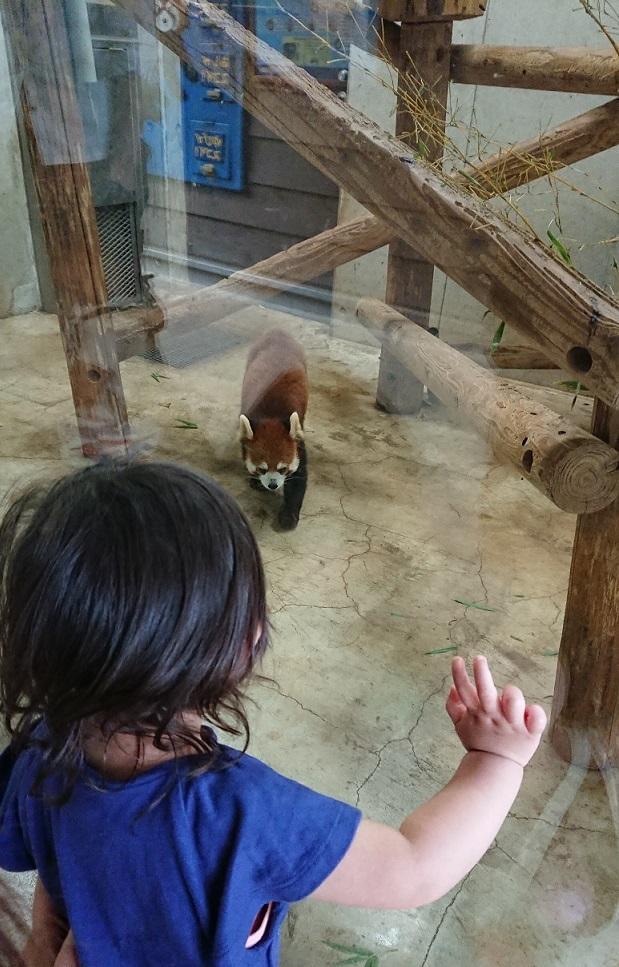 2018-2こども自然動物公園29(20180617)