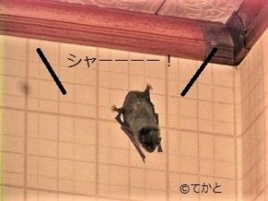 コウモリ,蝙蝠,台所