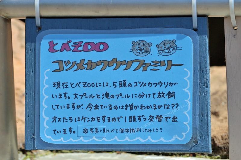とべZOO コツメカワウソファミリー 手作り看板