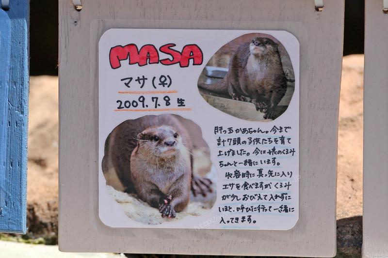 MASA マサ(♀) 2009.7.8生 写真付き手作り看板
