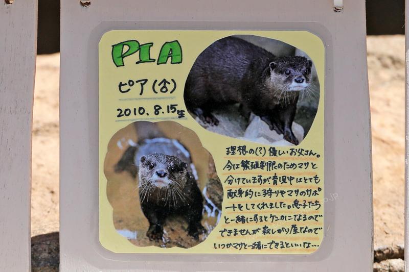 PIA ピア(♂) 2010.8.15生 写真付き手作り看板