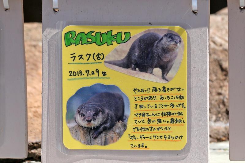 RASUKU ラスク(♂) 2013.7.29生 写真付き手作り看板