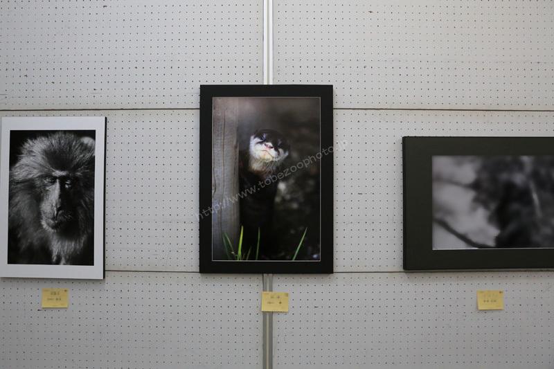 春を彩る美術の祭典 ・ 第66回春季県展 愛媛県美術会 写真部門出展