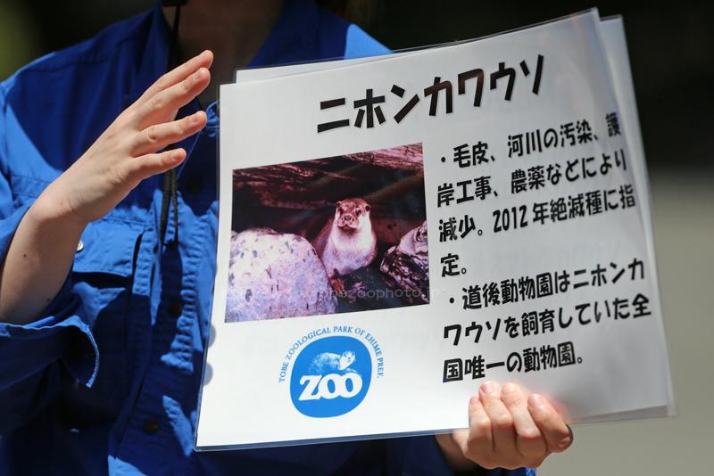 World Otter Dayイベント、世界カワウソの日に合わせて、とべ動物園でイベント