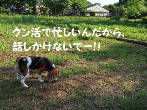 IMG_0068-2.jpg