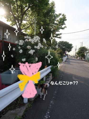 IMG_0331-2-2.jpg