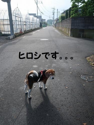 IMG_0420-2.jpg