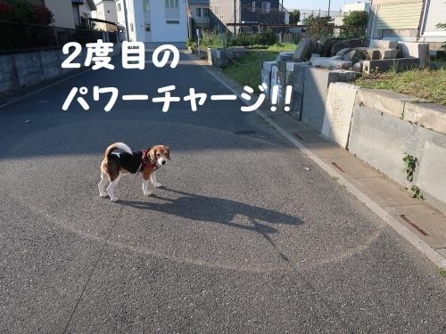 IMG_1049-2.jpg