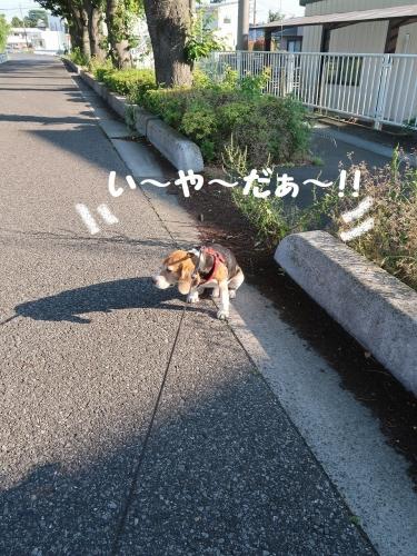 IMG_1064-2.jpg