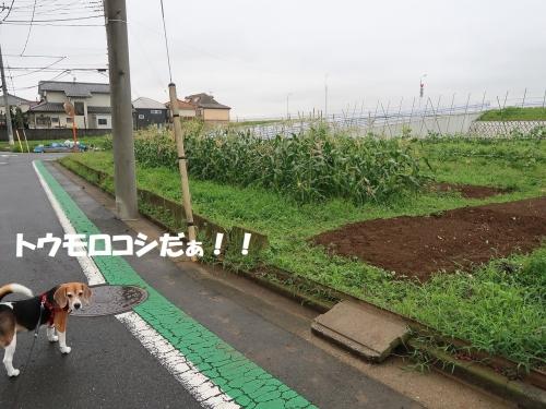 IMG_2658-2.jpg