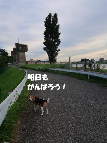 IMG_3720-2.jpg