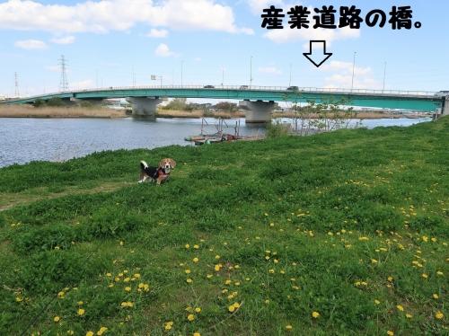 IMG_7960-2.jpg