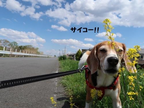 IMG_8009-2.jpg