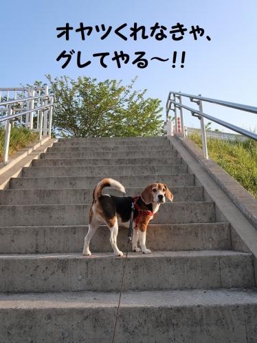 IMG_8471-2.jpg