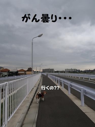 IMG_8595-2.jpg