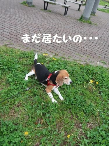 IMG_8635-2.jpg