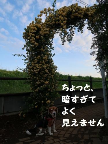 IMG_8654-2.jpg