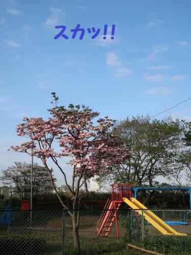 IMG_8660-2.jpg