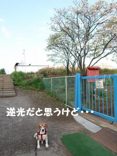 IMG_8666-2.jpg