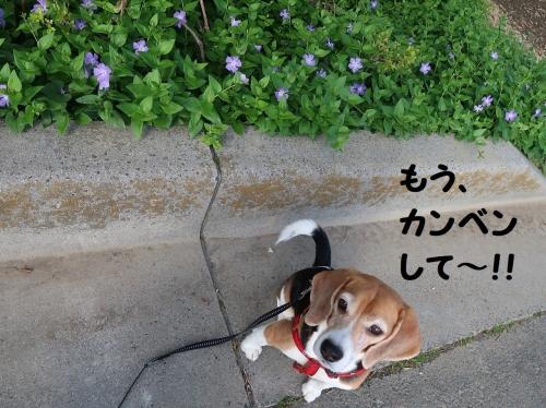 IMG_8708-2.jpg