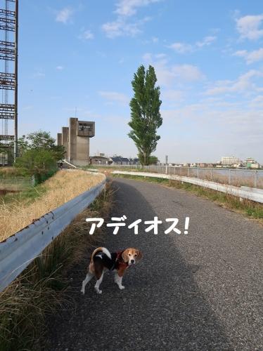 IMG_8717-2.jpg