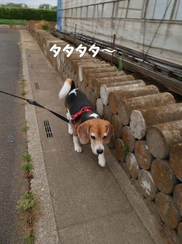 IMG_8744-2.jpg