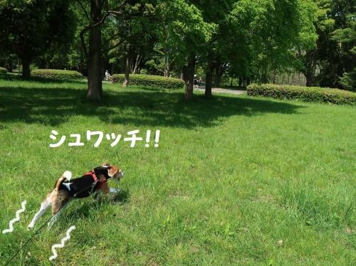IMG_8989-2.jpg