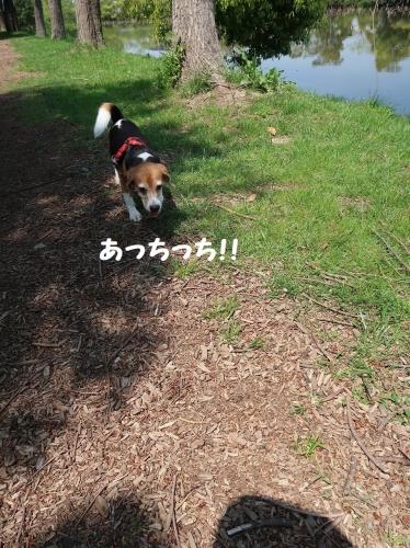 IMG_9025-2.jpg