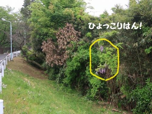 IMG_9114-2.jpg