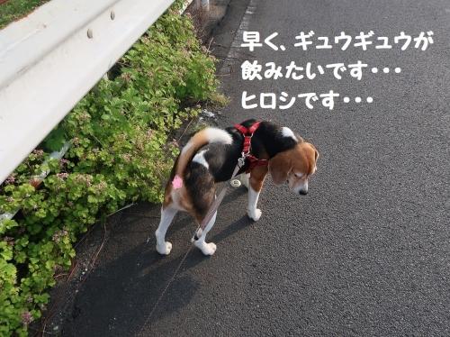 IMG_9636-2.jpg