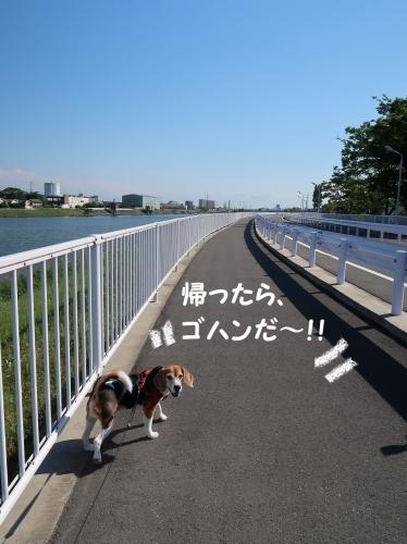 IMG_9745-2.jpg
