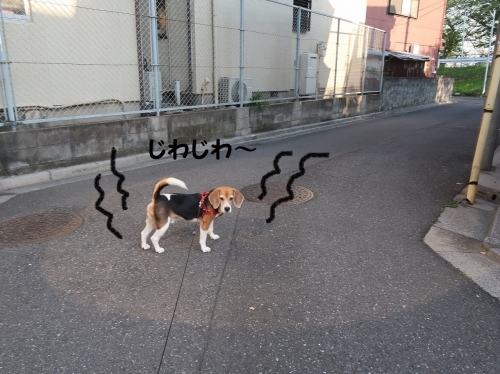 IMG_9845-2.jpg