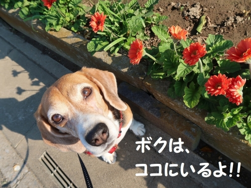 IMG_9914-2.jpg