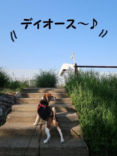 IMG_9915-2.jpg