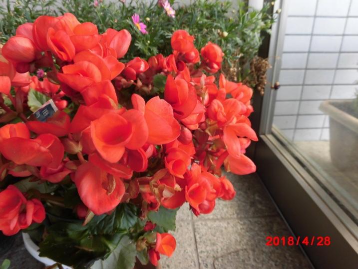 H30.春8