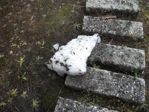180407残雪2