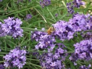180628ミツバチに人気