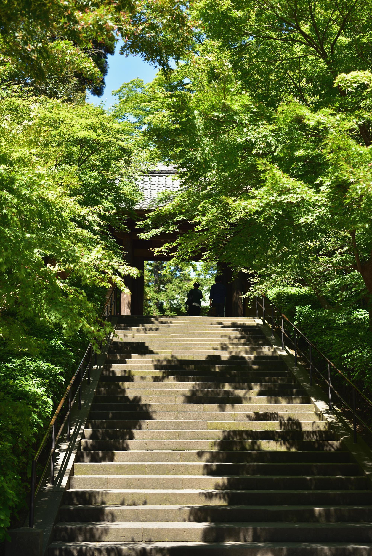 円覚寺新緑