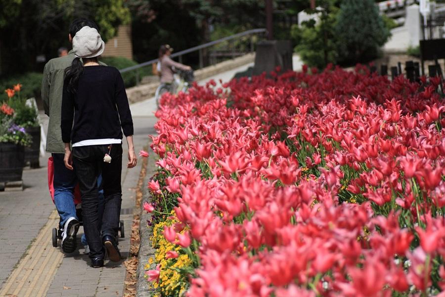 no507花壇と歩行者