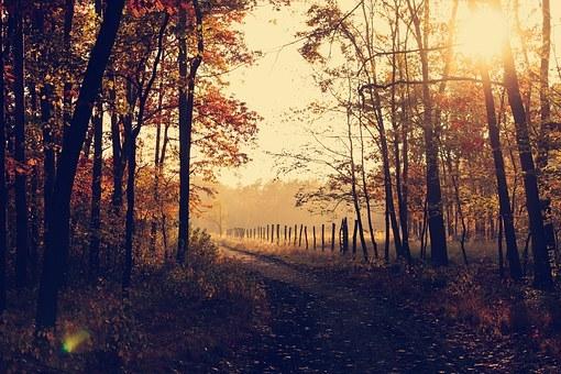 woodland-1031154__340.jpg