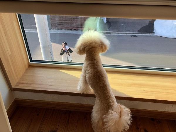 ココモコちゃん専用の窓からこんにちは