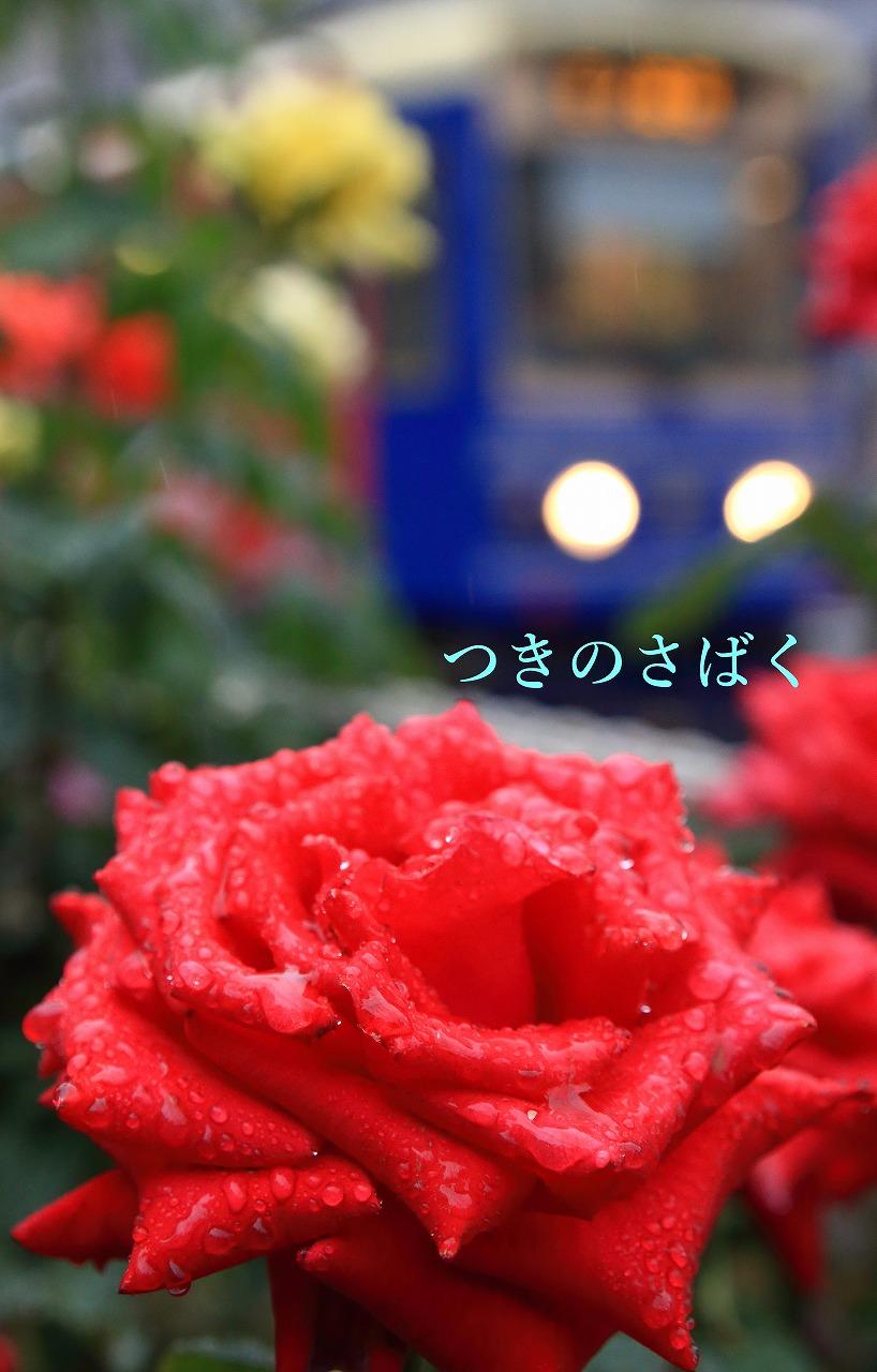 IMG_3116kido_1.jpg