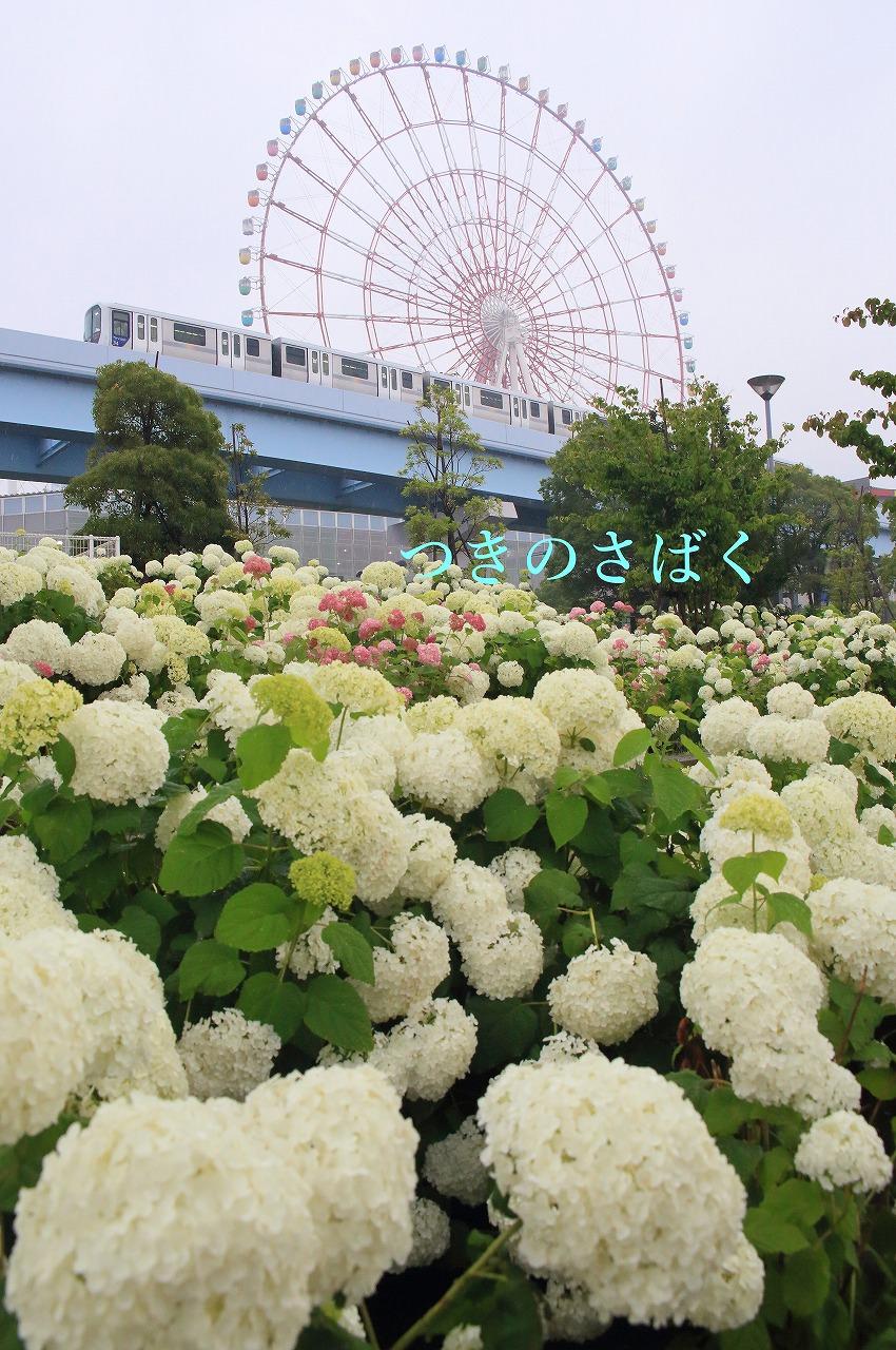 IMG_7874akarume_1.jpg