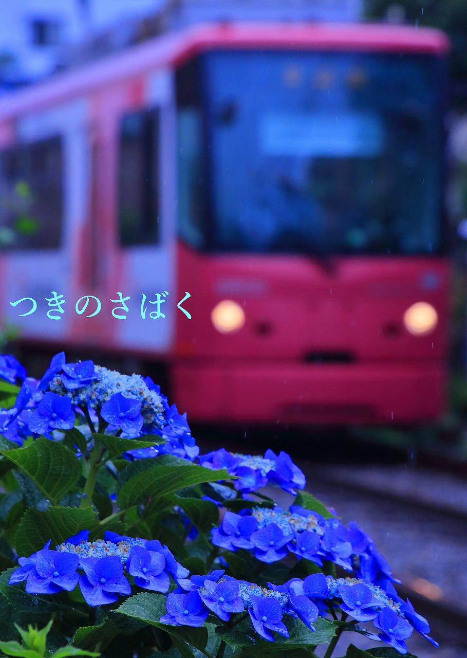 IMG_7968f4100_1.jpg