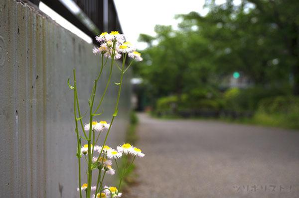 墨田公園040