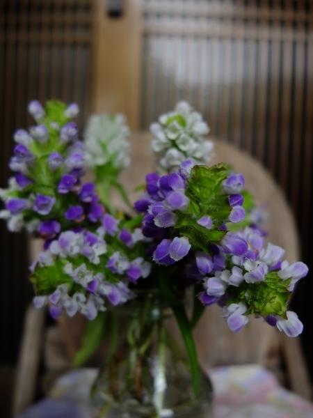 0606ウツボグサ花瓶a