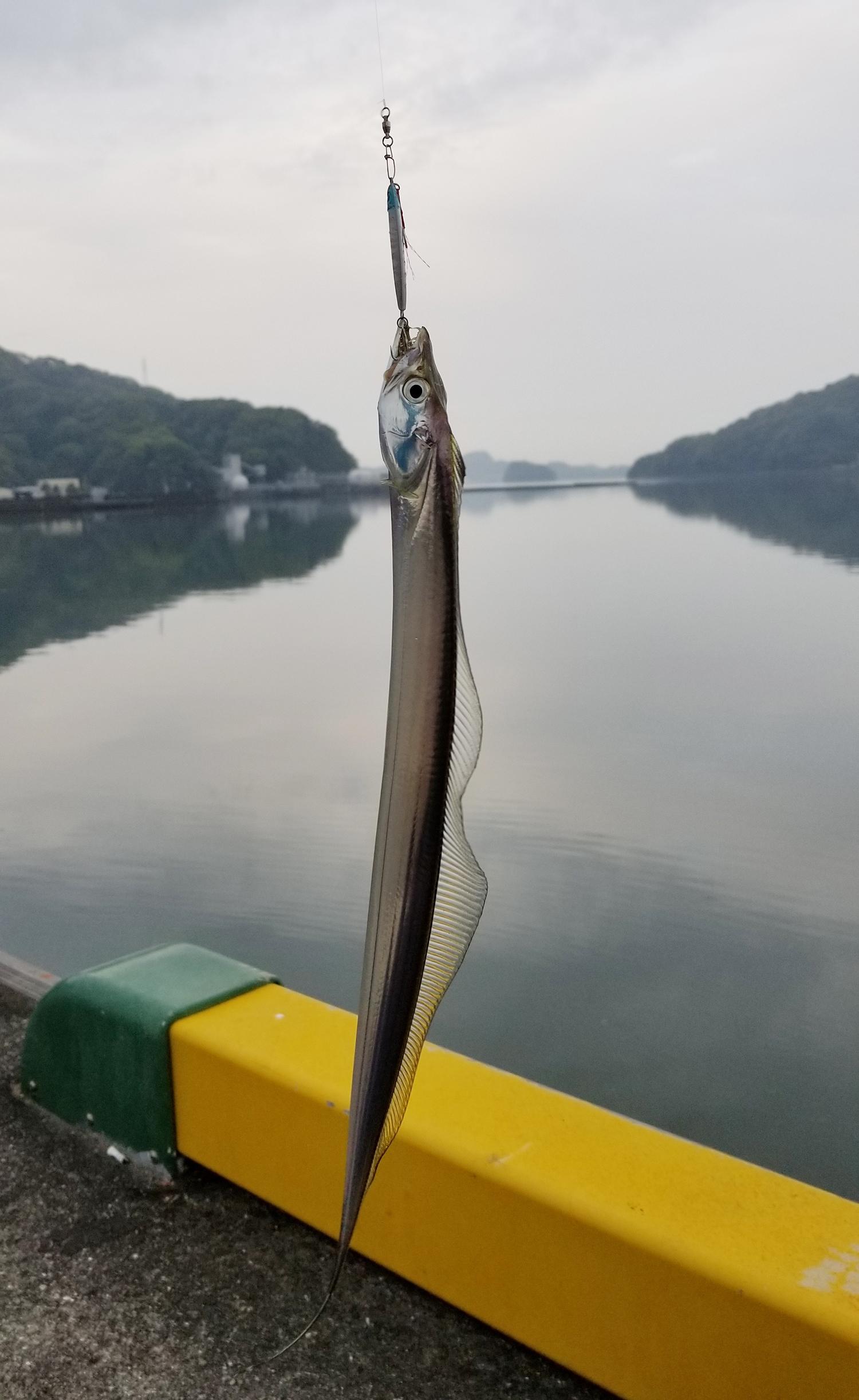 【釣果情報】太刀魚