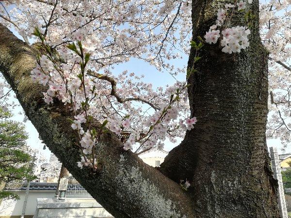 eikakuji-tsuruga-017.jpg