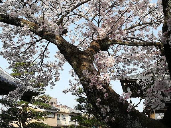 eikakuji-tsuruga-020.jpg